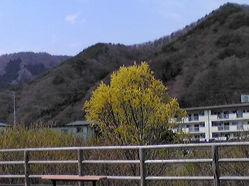 黄色の木(小)