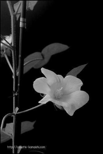 [ bloom ]