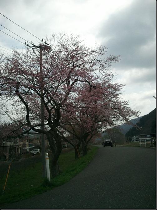 2012-04-25_08.40.37