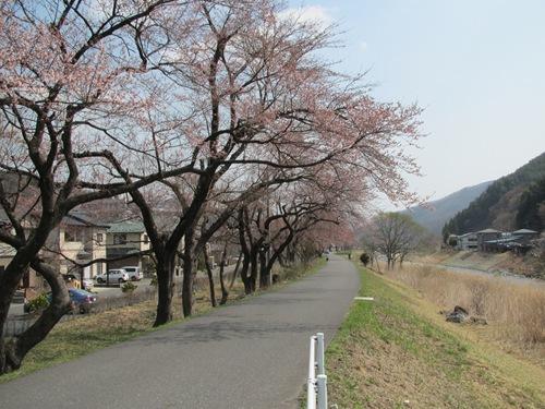 2011釜石さくら便り 03